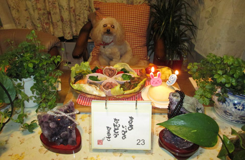 Nonnon 9歳 祝いご飯a