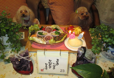 Nonnon 9歳 祝いご飯b