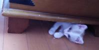 みぃな 3段ケージ19