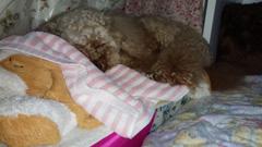 Rose 寝始めの位置