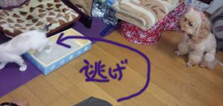 みぃな 817-3 14