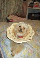 夜中座る犬1