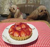 リベンジ祝記念日ケーキ2