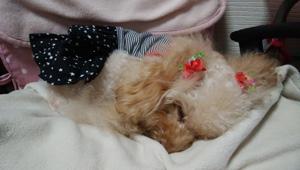 毛布の上で寝始めましたN