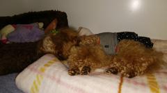 毛布の上で寝始めましたR1