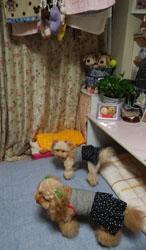 お洗濯~6