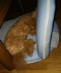 朝の寝場所 座椅子の上
