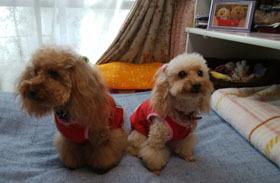 部屋着の赤い服1
