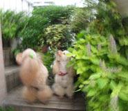 階段で 不思議な写真