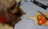 柿食べてみました1