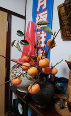 柿の保存法1