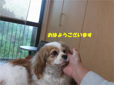 02_convert_20160428200222.jpg