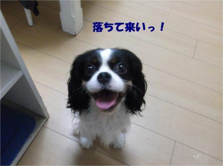 02_convert_20160727182015.jpg