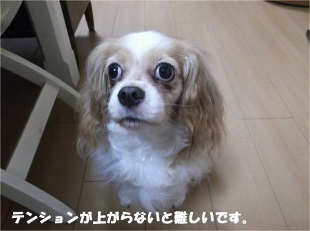 03_convert_20160707180936.jpg