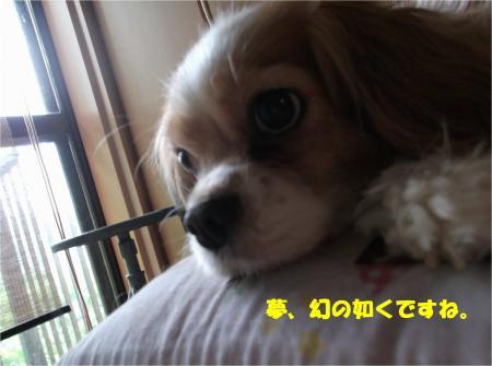 04_convert_20160603180133.jpg