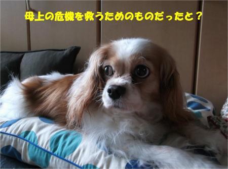 04_convert_20160715175534.jpg