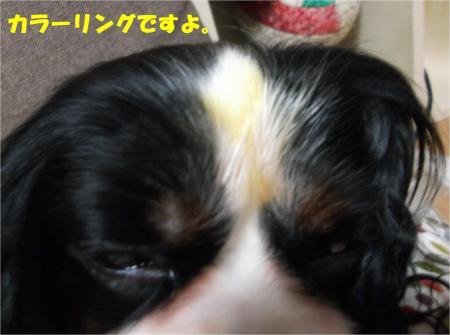 04_convert_20161028180453.jpg