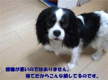05_convert_20160509181418.jpg