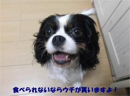 05_convert_20161025185445.jpg