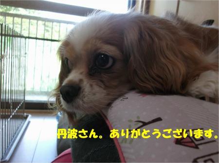 07_convert_20160621182456.jpg