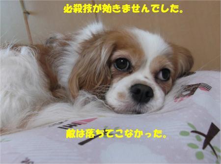 08_convert_20160428200520.jpg