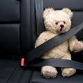 シートベルトとクマ