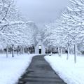 積雪している道路