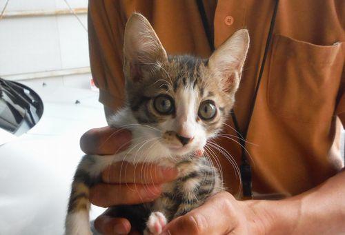 猫4(メス)