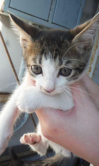 猫2(オス)