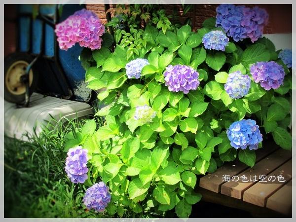 2010 紫陽花