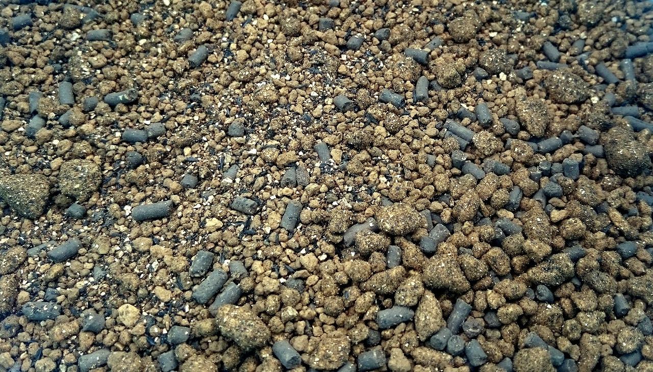 20160424-Aglaonema_Soil-X01.jpg