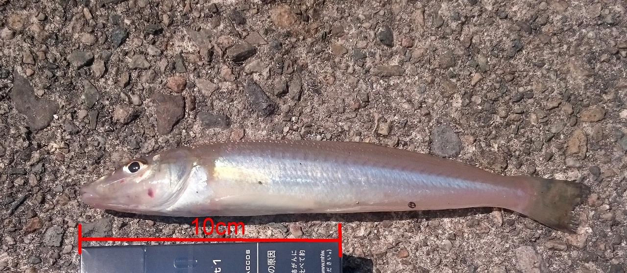 20160502-Fishing-X01.jpg
