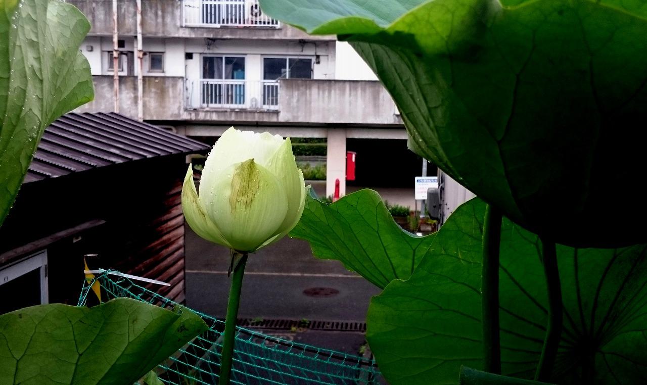 20160703-Lotus_Shinnyren-X01.jpg