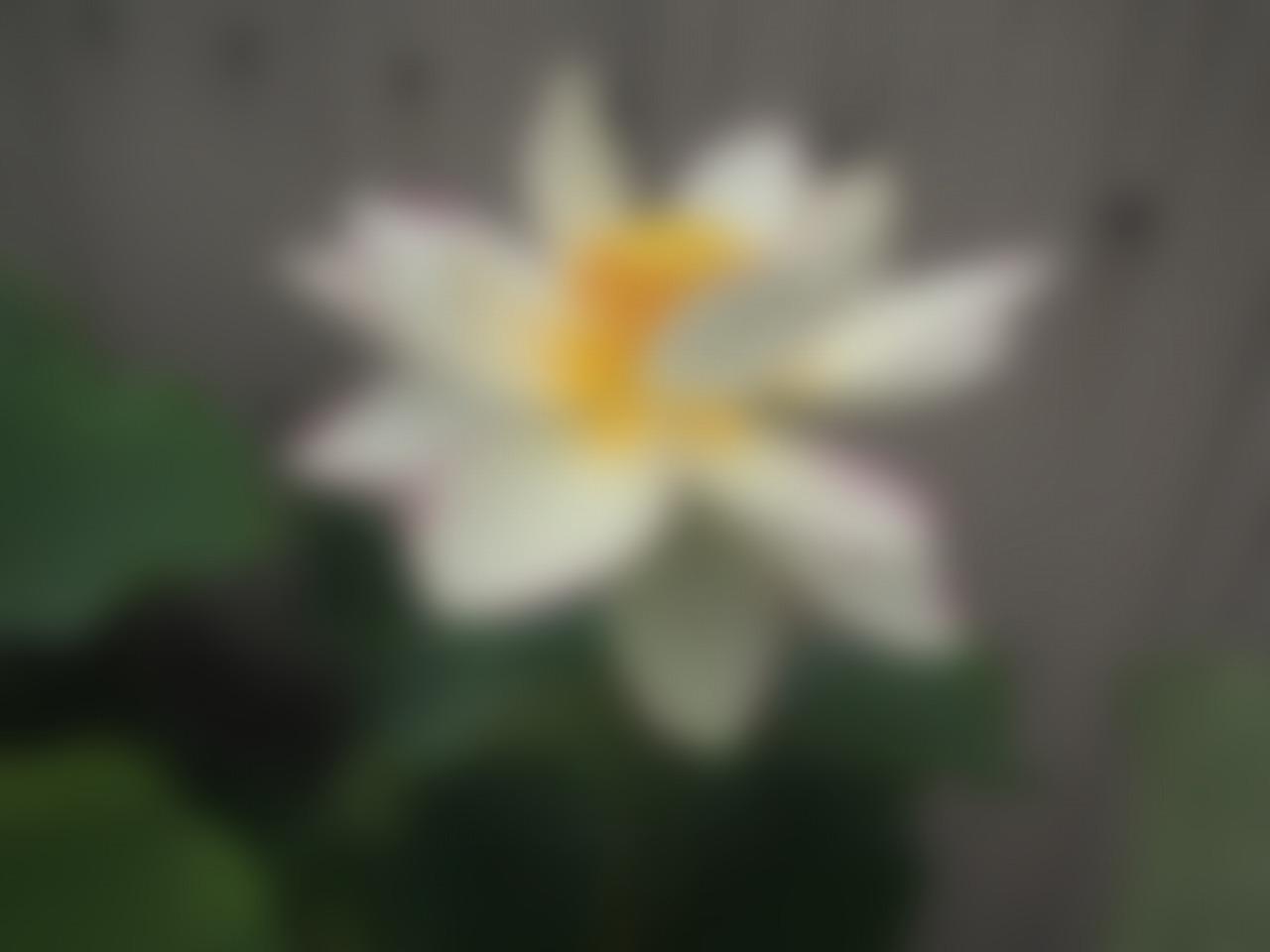 20160707-Lotus_Itenshikai-O03_B.jpg