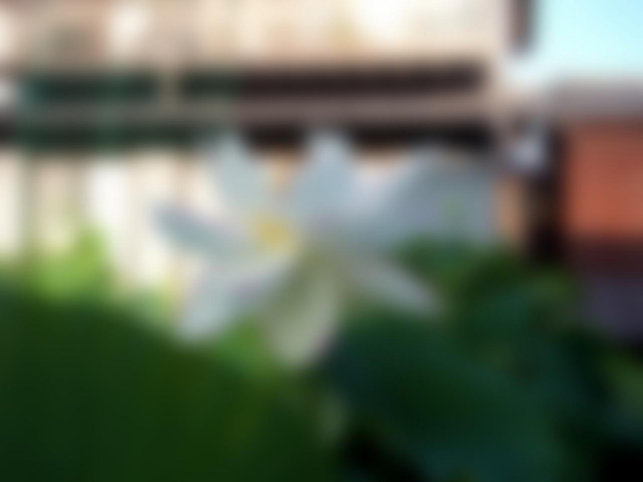 20160707-Lotus_Ittenshikai-O01_B.jpg