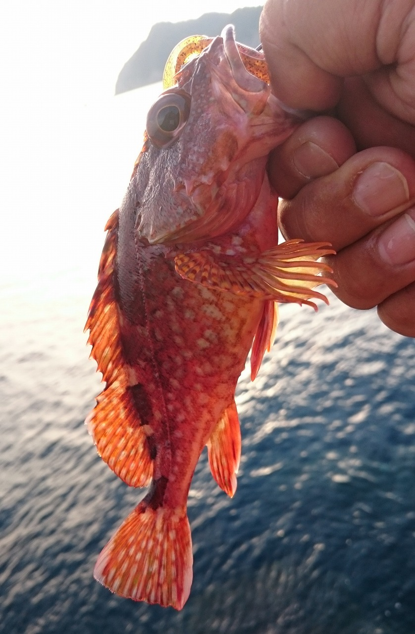 20160730-Fishing-X05.jpg