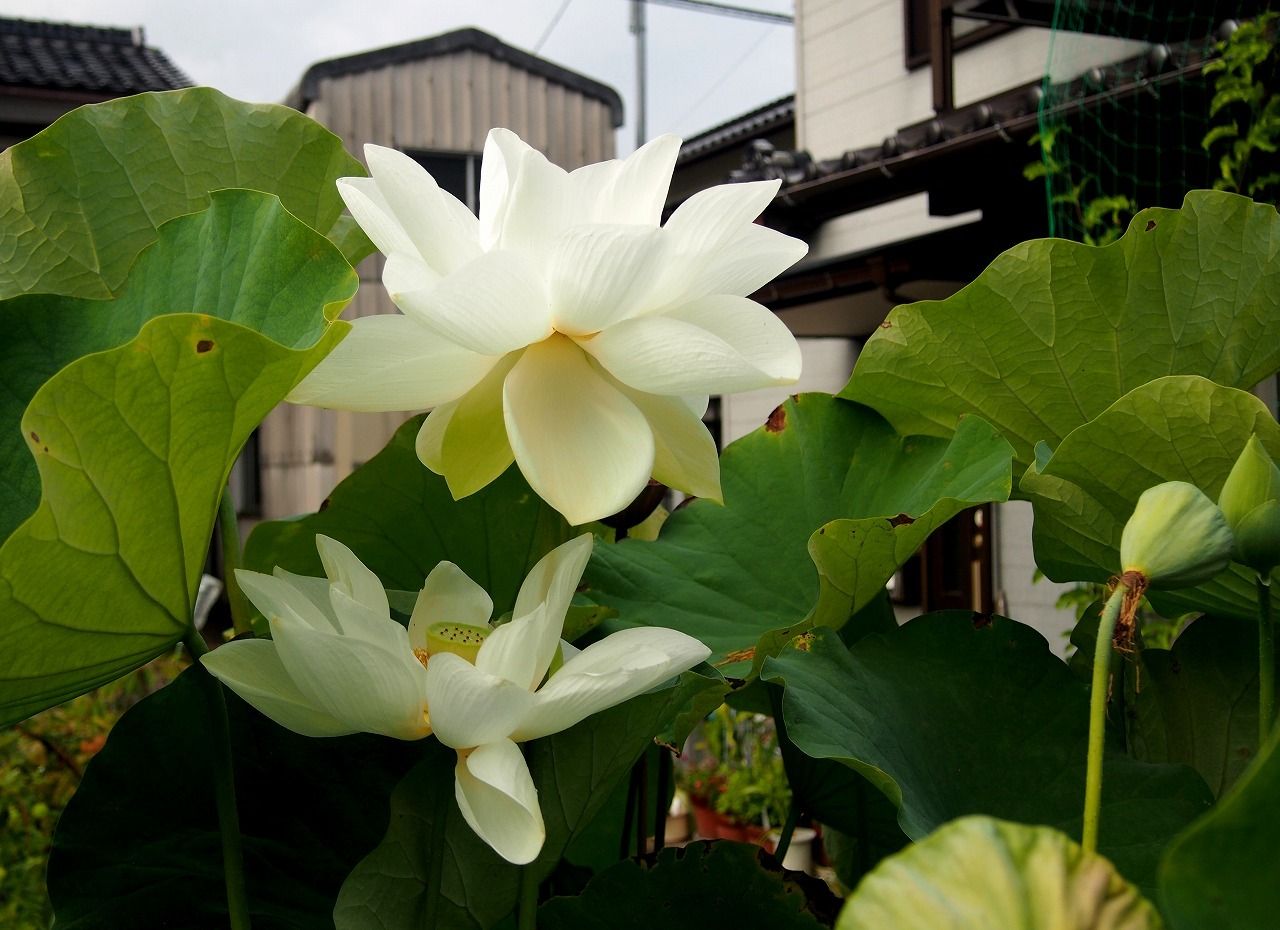 20160820-Shinnyoren-O01_B.jpg