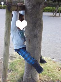 木登りくん