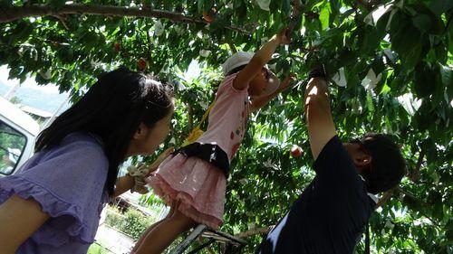2016平成28年一宮御坂山梨県内桃狩り食べ放題時間無制限できるおすすめ農園