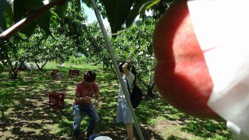 2016平成28年一宮御坂山梨桃狩り食べ放題時間無制限できるおすすめ農園