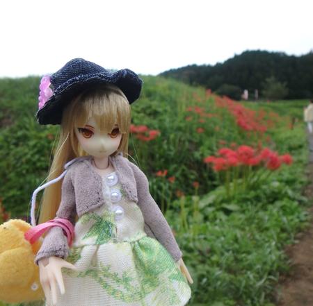 28_9_22 簑沢の彼岸花 4