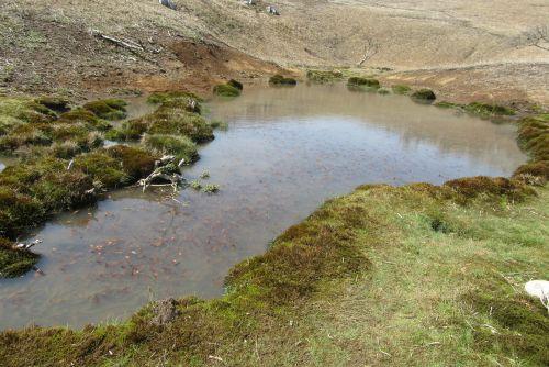 ドリーネと池
