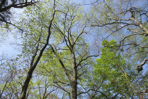 ブナ林の新緑