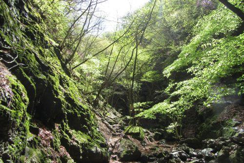 新緑の渓谷