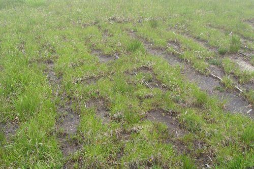 回復途上の湿原