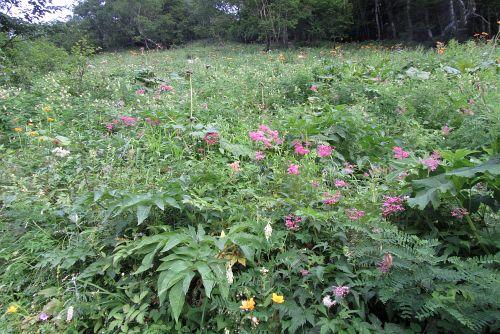 草すべりのお花畑