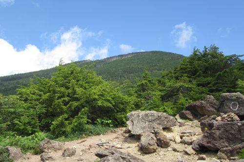 黒斑山の針葉樹林
