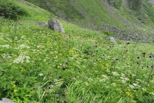 カルデラ内のお花畑