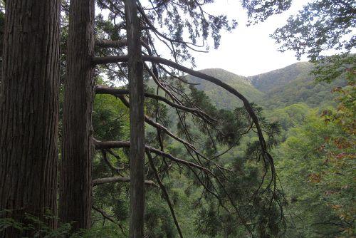 下垂した枝