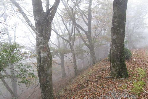 霧のブナ林